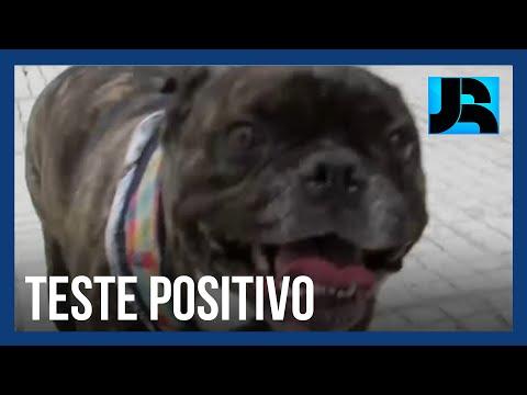 UFPR confirma primeiros casos de coronavírus em cachorros no Brasil